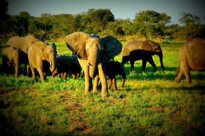 elephants-at-kruger-national-park-south-africa-by-kristen-gill-photography