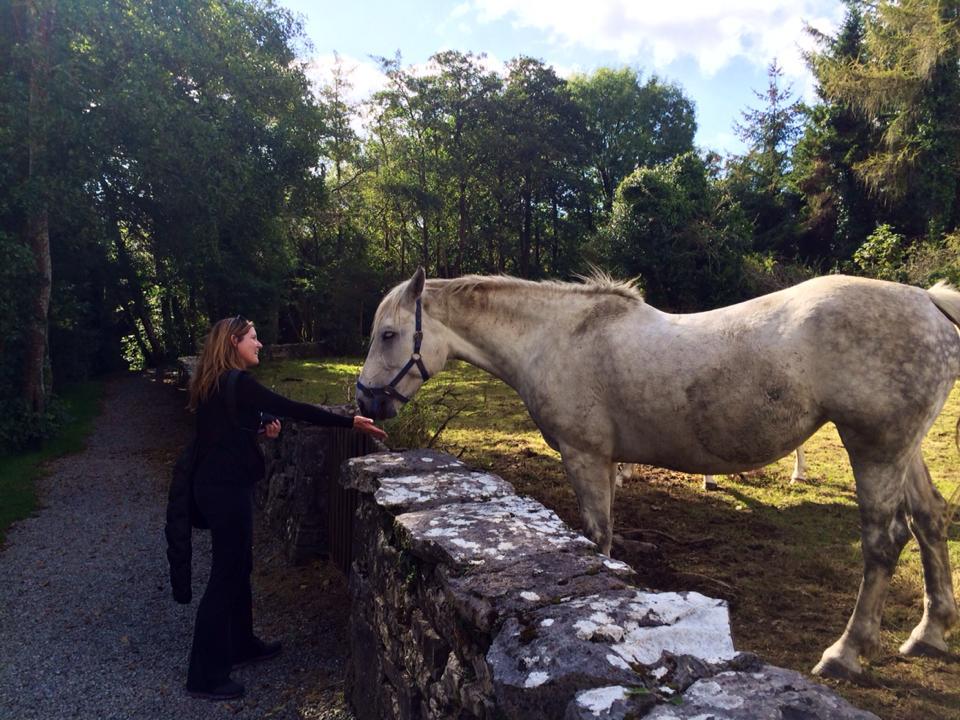 Kristen Gill Connemara Pony Ireland