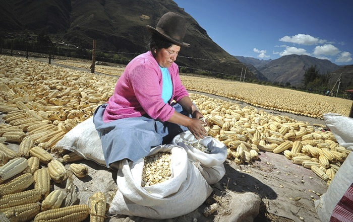 peruvian-woman-corn